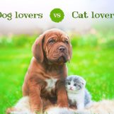 Cat Lovers vs. Dog Lovers